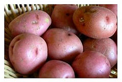 Red potatoes are easy and versatile