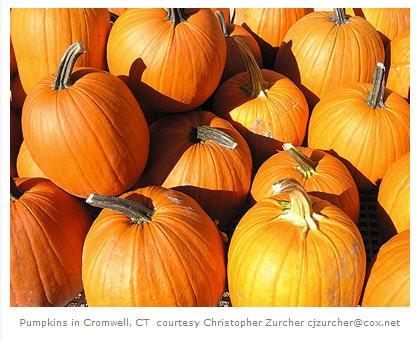 Pumpkins courtesy Christopher Zurcher
